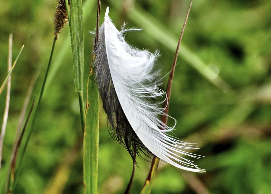 Mit dem Wind getragen und hängen geblieben