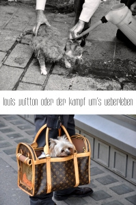 Mit Haustieren geht man unterschiedlich um.