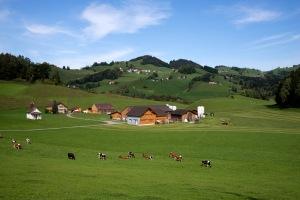 Typische Appenzellerlandschaft mit vielen grünen Hügeln und wunderschönen Bauernhöfen
