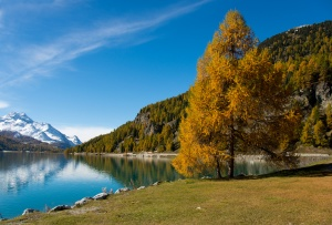 Oberengadin im Herbst mit goldenen Lärchen