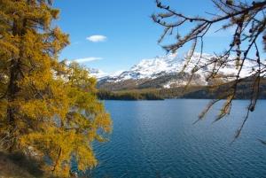 Blick auf goldene Lärchen, tiefblauen See und Schneeberge im Engadin