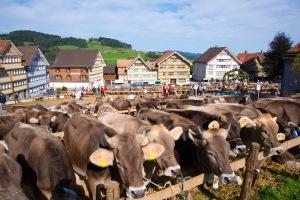 Viehschau Hundwil