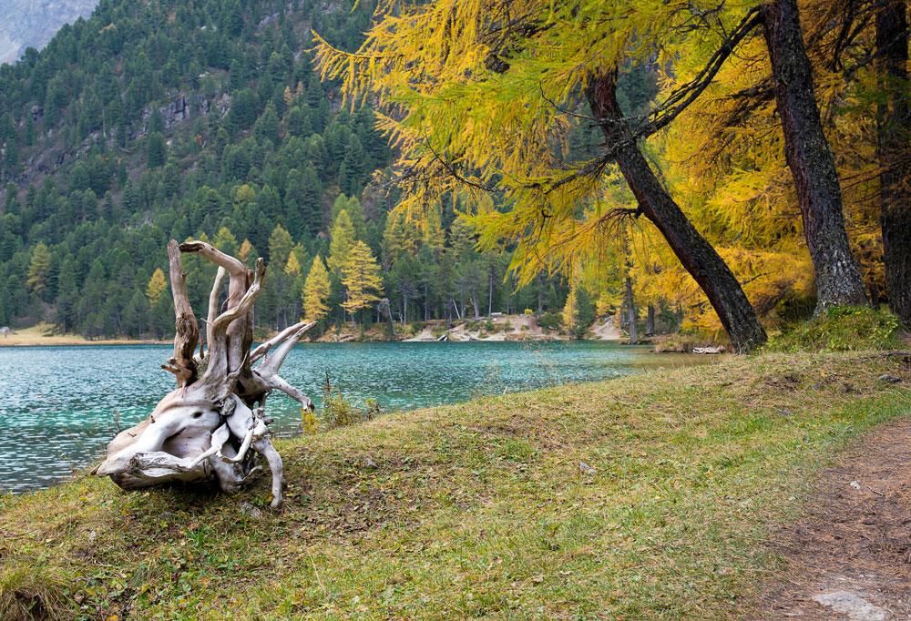 Goldener Herbst oderWintereinbruch