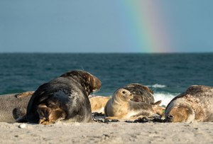 Seal-family_01