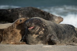 Seal's-love_01