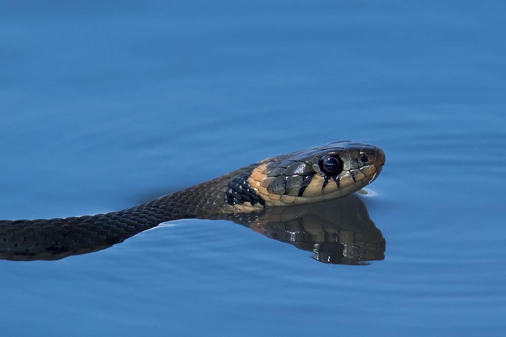 Mein Schlangenjahr