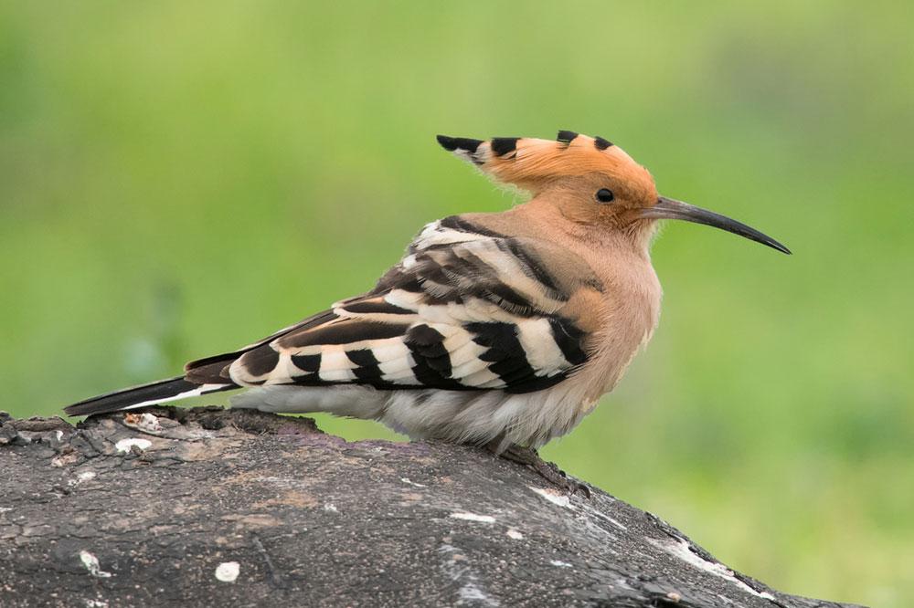Birding Bulgaria
