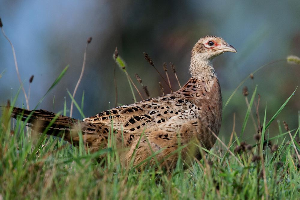 Birding im PoDelta